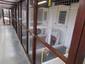 Indoor Cattery at Westfield Kennels and Cattery