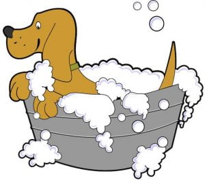 Dog grooming - dog in Bath