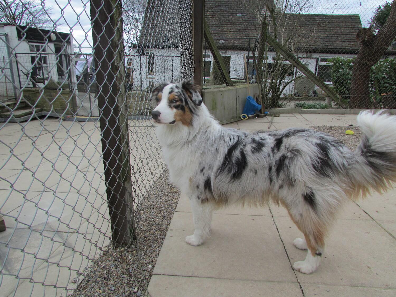 Dog in Westfield Kennels